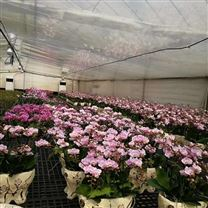 兰花养殖加湿设备 大棚喷雾加湿系统