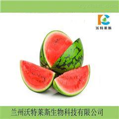 西瓜瓤速溶  固体饮料类粉