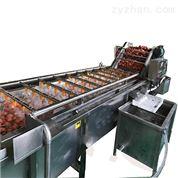 DRT連續式食用山野菜加工成套設備