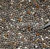 种子微波灭活设备多少钱一台